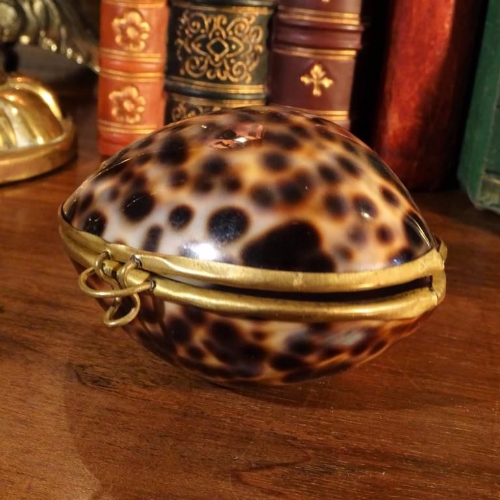 Tiger Cowrie Shell Coin Purse